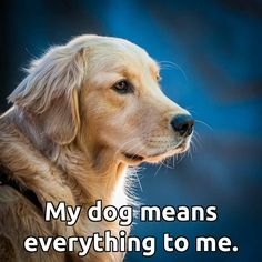 Share if you agree! #dogs #doglovers #love #puppies #life