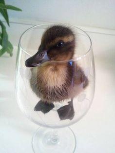 Camarero, hay un pato en mi copa!