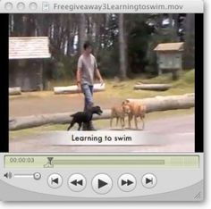 Stop any dog problem and raise the perfect puppy with The Online Dog Trainer. Get the right info+tools+confidence through videos to correct ANY dog behavior Online Dog Training, Dog Training Tips, Furry Tails, Learn To Swim, Smiling Dogs, Separation Anxiety, Free Dogs, Dog Accessories, Dog Mom