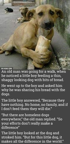 """""""But for this little dog, it makes all the difference in the world."""""""