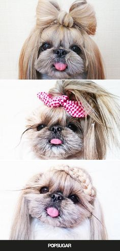 This adorable dog will give you serious hair goals.