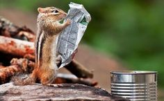 ahh, so the wars are still going on between chipmunks and squirrels bla bla bla