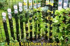 Build your own vertical garden using plastic bottles.