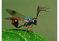 insectos raros - Buscar con Google