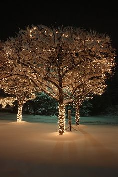 outdoor tree wrapped with lights while spotlights brighten the snow on the ground