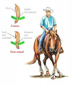 The real key to getting good spins and rollbacks is in the rider's body position and the cues he gives. Do you want to improve your position? Check out America's Horse Daily for tips on executing a perfect #rollback! #horsetraining