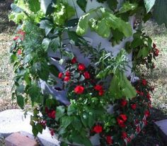 DIY Strawberry Pallet Planter | The Owner-Builder Network