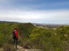 Bosque verde Ruta Sierra Escalona Orihuela ALicante Sierra, Alicante, Nature, Travel, Hiking Trails, Woods, Vacations, Green, Viajes