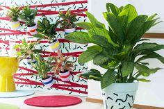 Ben je op zoek naar schitterend groen waar je niet veel aan hoeft te doen? Dan is Aglaonema de plant om in je huis te zetten.Het blad van Aglaonema heeft prachtige kleuren met fijnzinnige tekeningen. De lichtgroene varianten zijn het bekendst, maar de woonplant is ook verkrijgbaar met een zilveren, gele en rode gloed. De