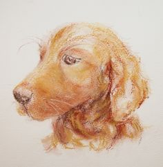 Amber by Lynn Norton © Done in ink and soft pastel on Bockingford quarter imperial NOT 425gsm watercolour paper