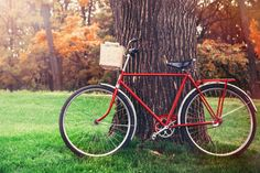 I like this vintage bicycle leaning against a tree.