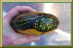 Painted Rock - Turtle