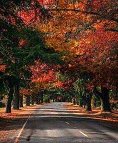 Bright, Victoria. I love love love this town!