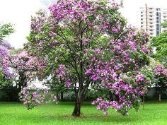 Árvores que absorvem poluentes | Jardim das Ideias STIHL - Dicas de jardinagem e paisagismo
