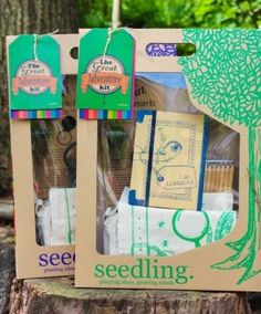 Seedling Great Adven
