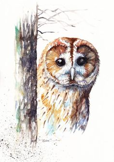 Original Watercolour Painting by Be Coventry,Animals,Realism,Tawny Owl