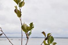 Sokajärvi Kainuu