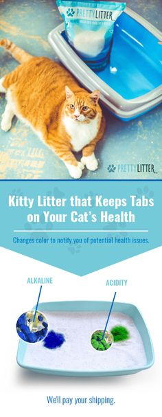 One Bag = One Cat = One Month. Thirty day supply of PrettyLitter shipped directly to your door. Your order's shipping is FREE. Non-clumping, flushable, dust-free, advanced odor-control and health monitoring cat Litter