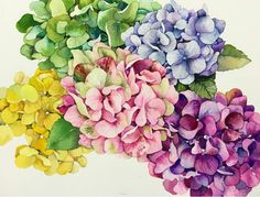 Watercolor Art Face, Watercolor Art Lessons, Watercolor And Ink, Watercolor Flowers, Watercolor Paintings, Watercolors, Botanical Art, Botanical Illustration, Hydrangea Painting
