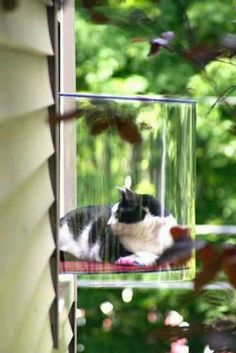 If you're to afraid that your cat would get loose from a normal catio, then this is great! It lets your cat see outside and feel like they are outdoors! This will probably also help to keep out harmful things from the cat.