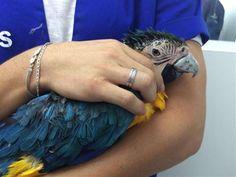 3ders.org - Brazilian parrot receives world's first titanium 3D printed beak | 3D Printer News & 3D Printing News