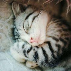 Sleepy kitty - I feel you! More Sleepy kitty - I feel you! More Sleepy kitty - I feel you! Sleepy kitty - I f Cute Cats And Kittens, I Love Cats, Crazy Cats, Kittens Cutest, Funny Kitties, Beautiful Cats, Animals Beautiful, Baby Animals, Cute Animals