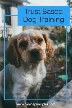 Dog Training Classes, Best Dog Training, Training Courses, Training Tips, Cute Baby Dogs, Cute Puppies, Dogs And Puppies, Teach Dog Tricks, Cute Little Animals