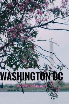 Cherry blossoms Washington DC USA travel