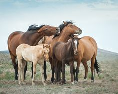 Wild Horses of Nevada by DawnRiddle on 500px