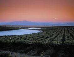 Dusk falls over the Swartland (black lands) vineyards South African Wine, All Over The World, Dusk, Touring, Photo Galleries, Sunset, Gallery, Beach, Water