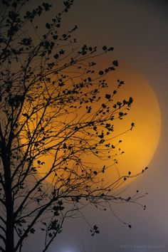 pearl-nautilus:  Autumn Equinox Harvest Moon