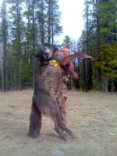 Giant Wolf Epidemic Packs Of Giant Canadian Grey Wolves Are Terrifying Idaho Residents