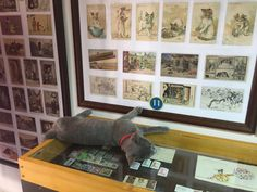 Cats Museum Kotor | © Sarah Pavlovic/Courtesy of Montenegro Pulse