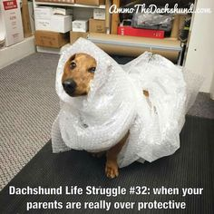 Need to do this to mine. She just had back surgery and I'm so afraid it'll happen again .