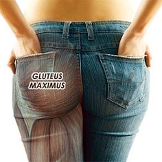 Glute activation exercises to fix Pelvic / Lower Crossed Syndrome and improve low back pain: Don't be that guy or girl - strengthen your glutes!