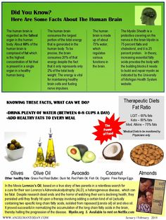 The Belly Fat Blog: Healthy Fats for the Brain [Infographic]