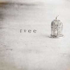 Believe that you are free. :: Fly Four by The Photo  Zoo