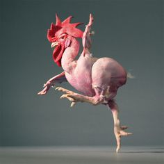 naked chicken breed