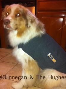 Thundershirt Saved the Night; best thing for dogs who get scared during storms, fireworks or just feel anxious at times  #spon #ad @Thundershirt