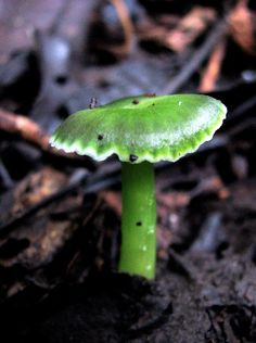 Green mushroom by cordyceps on Flickr (cc)
