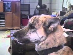 Talking Dog! Funny Dog Videos! Talking Dog Bacon!