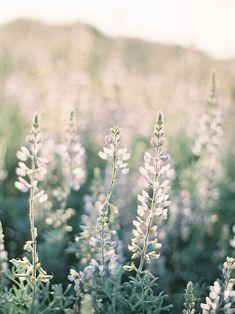 ♂ Bokeh photography pastel flowers