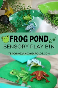 This spring sensory bin is a great addition to your frog theme! After learning about the frog life cycle, put together water, rocks, lily pads and frogs for some sensory fun! #frogs #sensory #sensorybin #science #water #pond #spring #preschool #AGE3 #AGE4 #teaching2and3yearolds Counting Activities, Spring Activities, Sensory Activities, 5 Speckled Frogs, Science Table, Lifecycle Of A Frog, Build Math, Frog Theme, Frog Life
