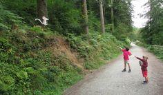 cardinham woods gruffalo trail Gruffalo Trail, The Gruffalo, Cornwall, Woods, Hunting, Road Trip, Country Roads, River, London