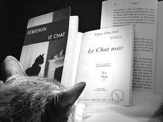"""Georges Simenon """"Le chat"""", Edgar Allan Poe """"Le chat noir"""""""