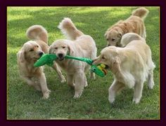 How to train your puppy - a complete how to