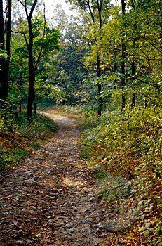 Yankee Springs Trail Run