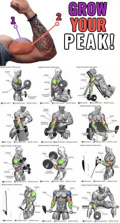 HOW TO ARM BLASTER What Is An Arm Blaster? An arm blaster is a lightweight p… HOW TO ARM BLASTER What Is An Arm Blaster? An arm blaster is a lightweight piece of exercise equipment that's usually worn while performing bicep curls. Gym Workout Chart, Gym Workout Videos, Ab Workout Men, Men Exercise, Workout Plans, Weight Training Workouts, Fitness Workouts, Lifting Workouts, Running Training