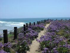 Del Mar-One of my favorite walks above the beach and by the train tracks.