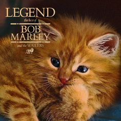 The Kitten Covers: Bob Meowley and the Wailers